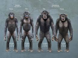 siege social bonobo tg traditional