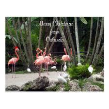 christmas flamingo postcards zazzle