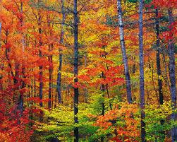 vibrant wallpaper vibrant autumn colors wallpaper autumn nature wallpapers in jpg