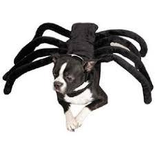 Disney Halloween Costumes Dogs Disney Pethalloween Cheshire Cat Costume Dog Halloween Dog