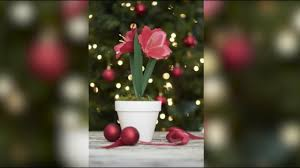 diy paper amaryllis lia griffith holiday flowers u0026 greens for