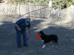 australian shepherd forum pets cubit dog chat forum australian shepherd