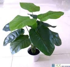 aliexpress com buy wholesale 13 leaves pcs scindapsus aureus