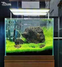 Monte Carlo Discus Ii Oliver Knott Aquascape In Shanghai With Micranthemum Species