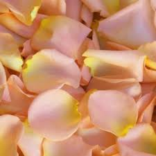 where can i buy petals best 25 fresh petals ideas on edible petals