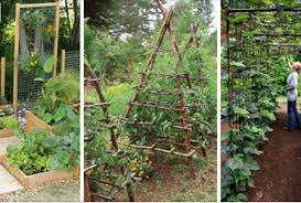 growing vegetables archives gardening soul