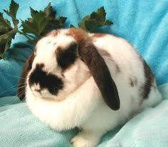 rspca bristol dogs cats rehoming bunnies lops