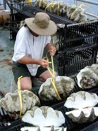 Where To Buy Seashells Shell Horizons Inc Seashells And Seashell Products Wholesale