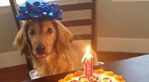 Birthday Cake Dog Meme - sweety high video entertainment beauty and lifestyle