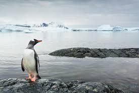 did ancient climate change spur penguin evolution