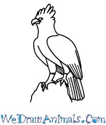 draw harpy eagle