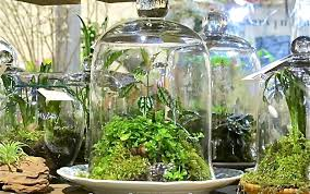 some do it in glass containers terrariums u2013 container gardening