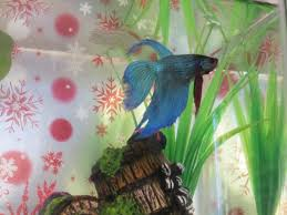 Cloudy Water From Faucet Betta Fish Cloudy Water Smelly And Filmy My Aquarium Club