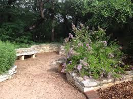 native texas plants for shade austin herb society