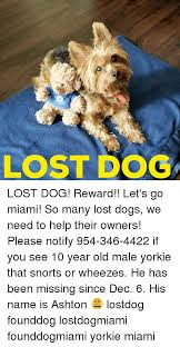 Lost Dog Meme - lost dog lost dog reward let s go miami so many lost dogs we
