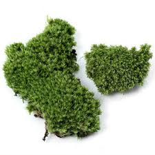 compare prices on artificial moss online shopping buy low price