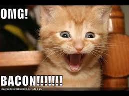 Lol Cat Meme - cat archives lol cat research
