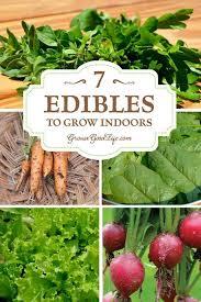 fall indoor food garden trending indoor vegetable gardening