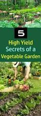 5 secrets of a high yield gardening vegetable gardening tips