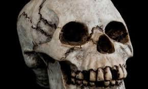 germany to investigate 1 000 skulls taken from colonies for