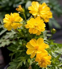 gold flowers 79 best yellow n gold flowers and plants images on