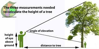 how to calculate tree height using a smartphone u2013 gabriel hemery