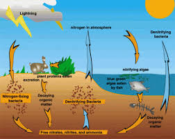 the carbon oxygen nitrogen and water cycles the arctic
