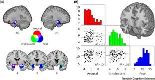 Human Brain Mapping Decoding The Nature Of Emotion In The Brain Trends In Cognitive