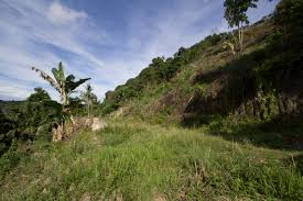 Sqm by 11 000 Sqm Panoramic Lot For Sale In Maria Luisa Park Cebu Grand
