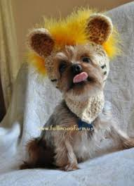 Small Dog Costumes Halloween 45 Halloween Costumes Pets Images Pet