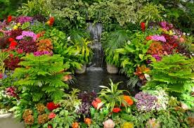 tropical garden flowers u0026 nature background wallpapers on