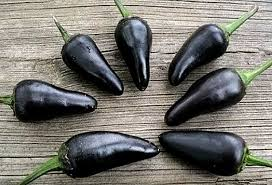 black hungarian sweet pepper 25 heirloom seeds non gmo