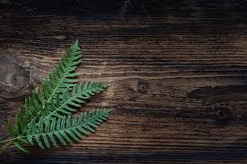 free photo fern small fern green plant free image on pixabay