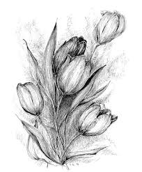 tulip flower drawing floral original art black white tulip