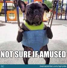 Grumpy Dog Meme - grumpy dog by spryide meme center