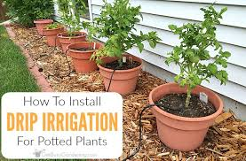 to install a diy drip irrigation system for potted plants