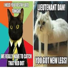 Funniest Memes Ever Made - 37 of the best cat memes the internet has ever made funny memes