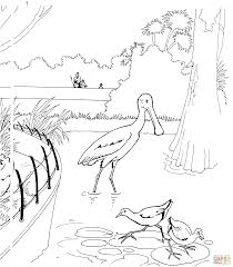 spoonbill bird in a zoo coloring page free printable coloring pages