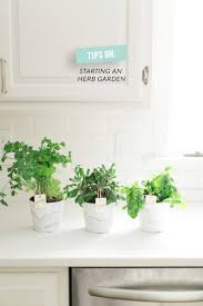 the 25 best kitchen herbs ideas on pinterest indoor herbs herb