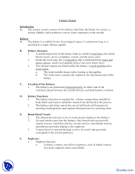 urinary system physiology and anatomy lecture notes docsity