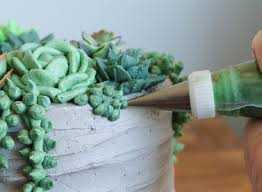 How To Make A Succulent Planter by Succulent Cake Buttercream Piping Tutorial