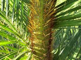 south florida native plants sfps home