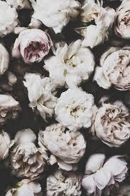 126 best black u0026 white flowers images on pinterest white