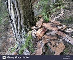 tree detail trunk barque sick forest log forest ground ground