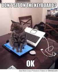 Meme Keyboard - don t sit on the keyboard cat meme cat planet cat planet