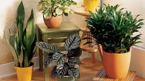 Easy Care Indoor Plants Chic House Plants U0026 Tips On Care Sunset