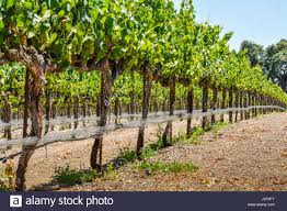 trellises stock photos u0026 trellises stock images alamy