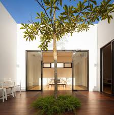 interior courtyard tree gorgeous house embracing the power of