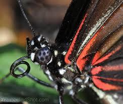 butterfly framedandshot
