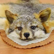 Animal Skin Rugs For Sale Grey Fox Skin Rug Sw4165 For Sale At Safariworks Taxidermy Sales
